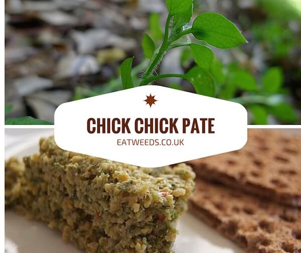 Chickweed Pate Recipe