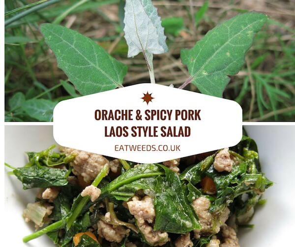 Orache & Pork Laos Style Salad