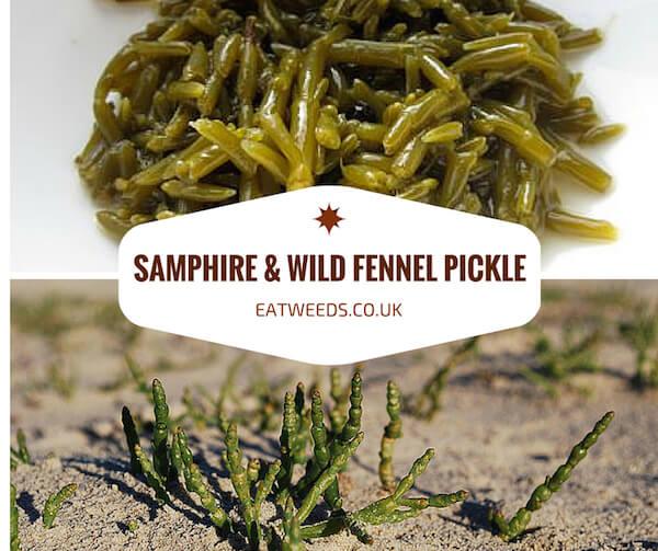 Samphire Pickle Recipe