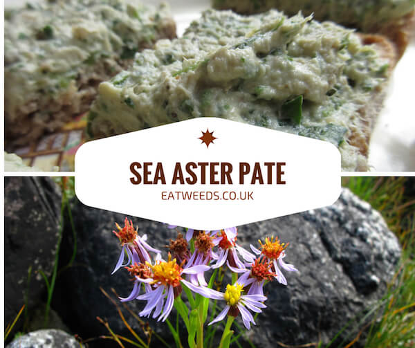 Sea Aster Pate Recipe