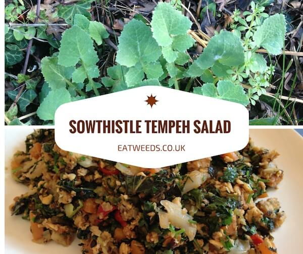 Sowthistle Recipe