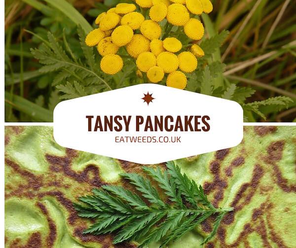 Tansy Recipes