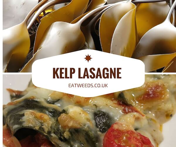 Kelp Lasagne Recipe