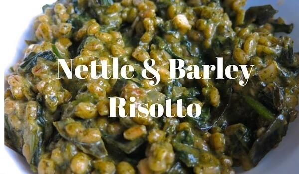 Nettle Risotto Recipe