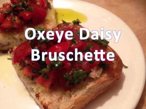 Oxeye Daisy Recipe