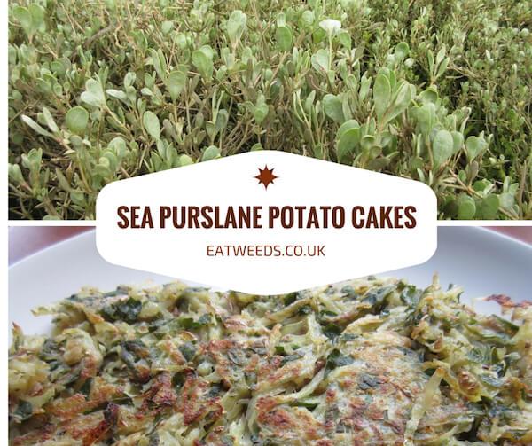 Sea Purslane Recipe