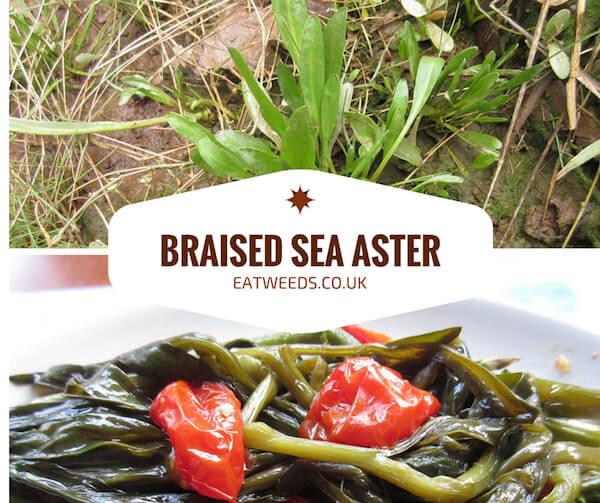 Sea Aster Recipe