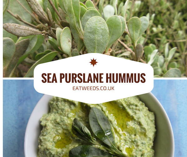 Sea Purslane Recipe