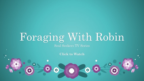 Soul Seekers TV Series Interview With Robin Harford Forager