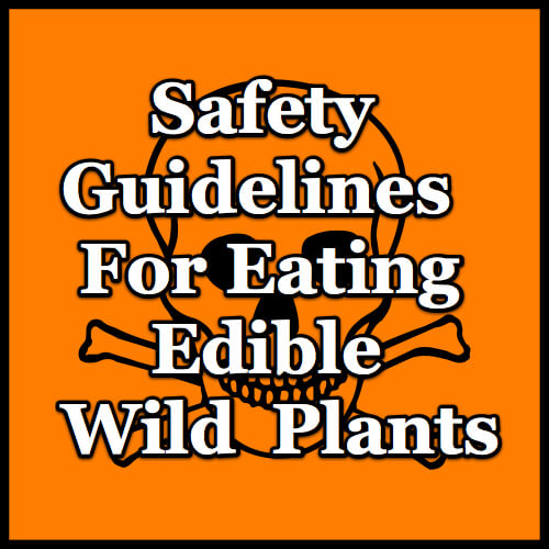 wild-food-safety