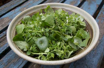 Wild Winter Herb Salad