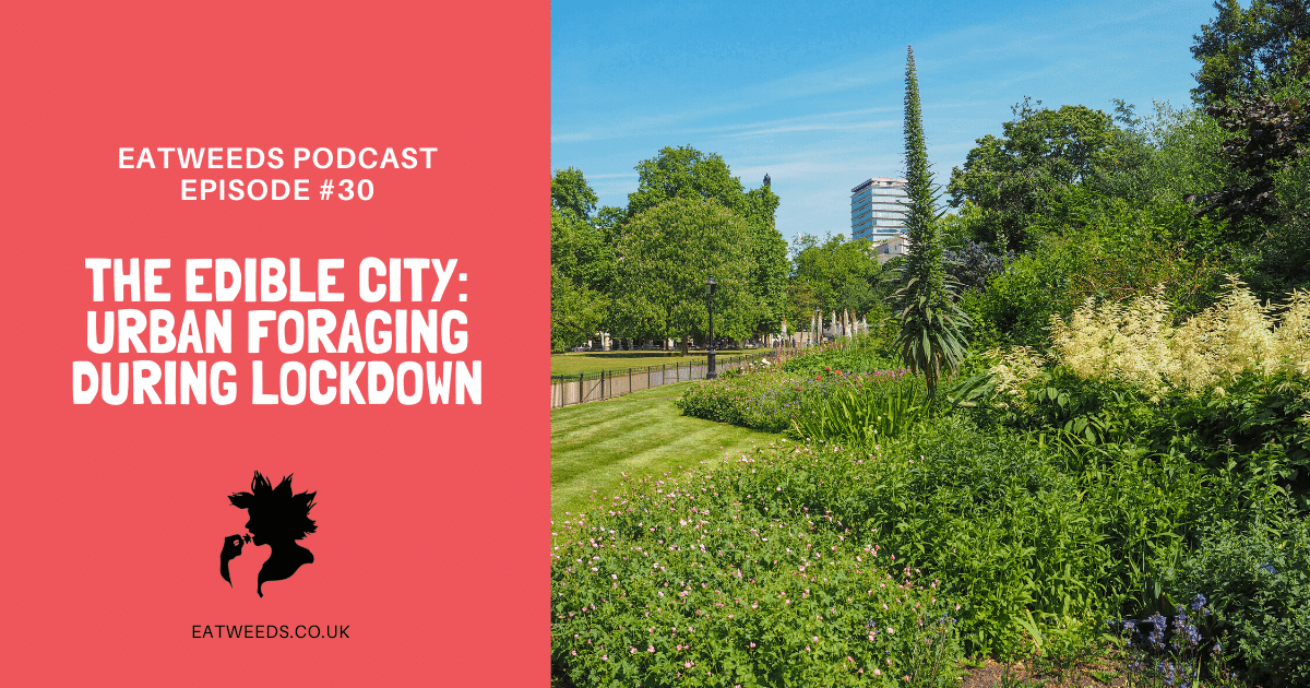 EP30 The Edible City: Urban Foraging During Lockdown
