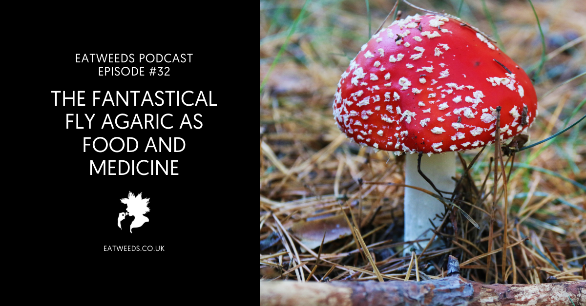 Fly Agaric as Food and Medicine