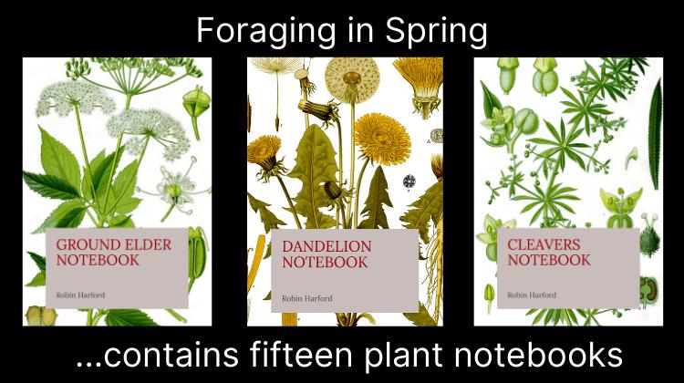 Foraging in Spring Wild Food UK