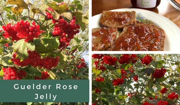 guelder-rose-jelly-recipe