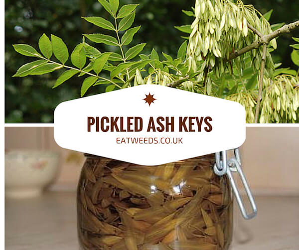 Pickled Ash Keys Recipe