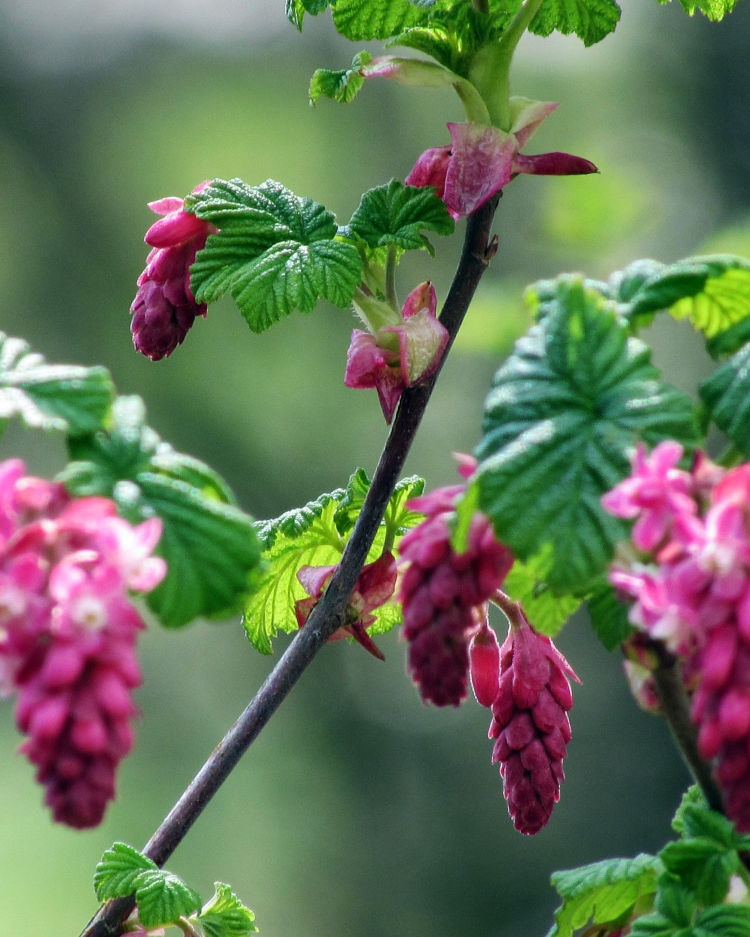 What to Forage in April – The Best Wild Food Plants to Harvest