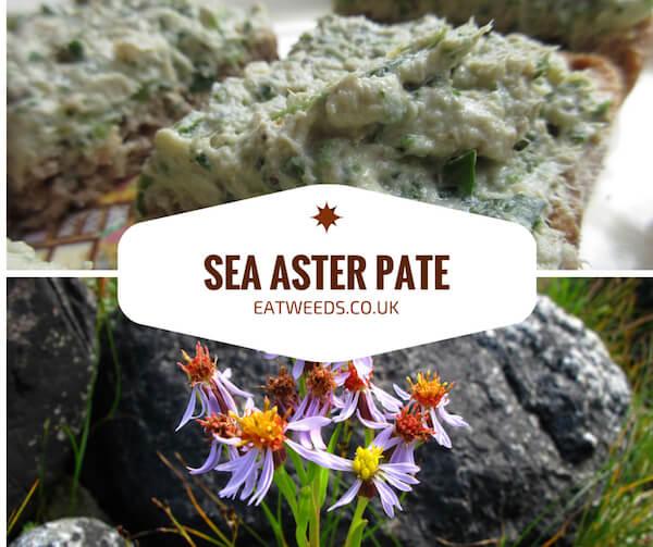 Sea Aster Pate Recipe