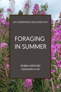 Foraging in Summer