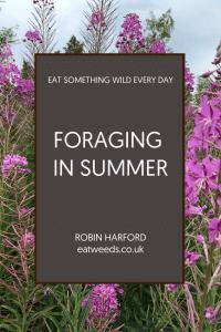 Foraging in Summer