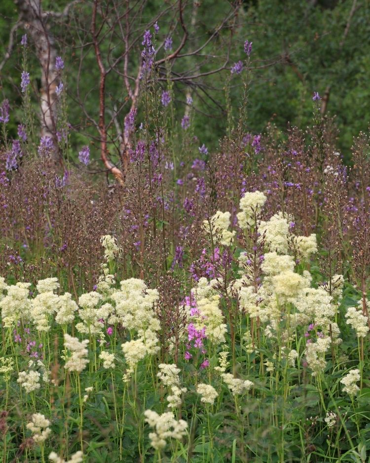 What to Forage in June – The Best Wild Food Plants to Harvest