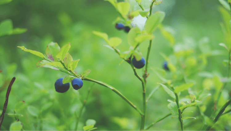 Why People Fear Eating Wild Food