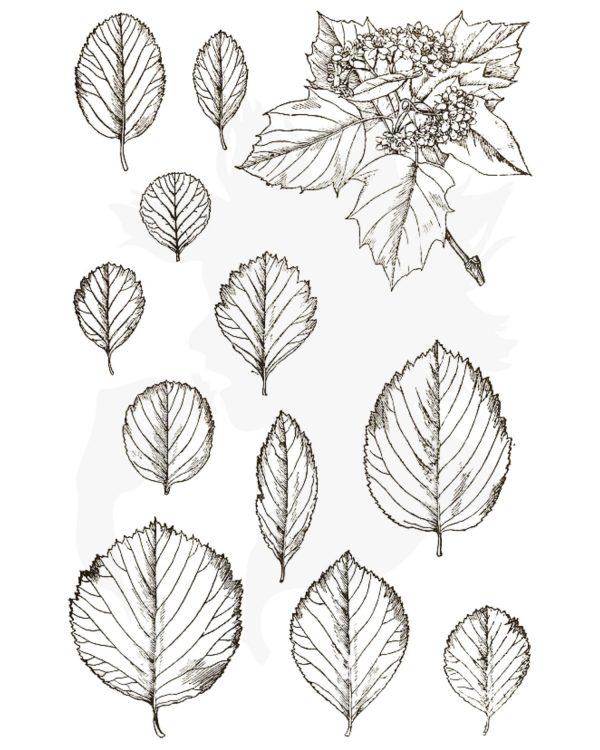 Wild Service or Chequers Tree - Sorbus torminalis