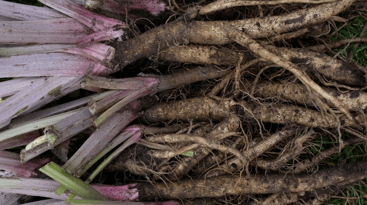 Burdock Root Recipe