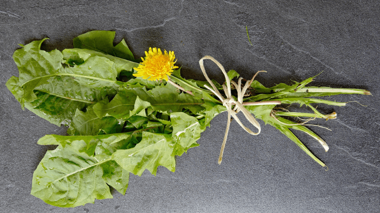 Dandelion - Taraxacum officinalis