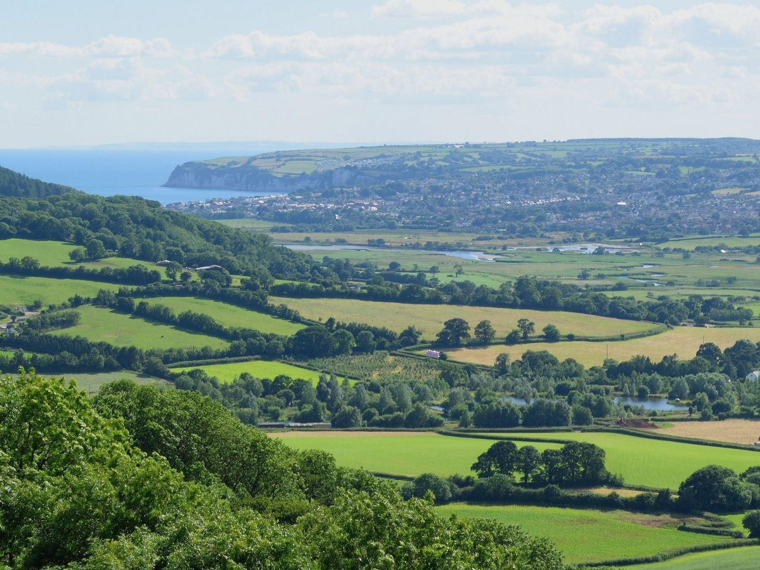 Devon Foraging Courses and Walks