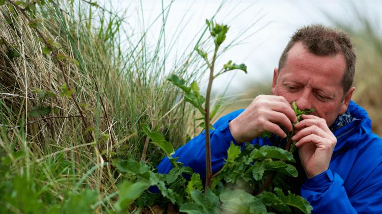 Eatweeds Wild Food Foraging Guide