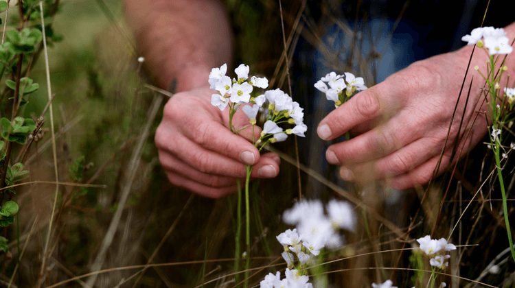Eatweeds - The wild food foraging guide