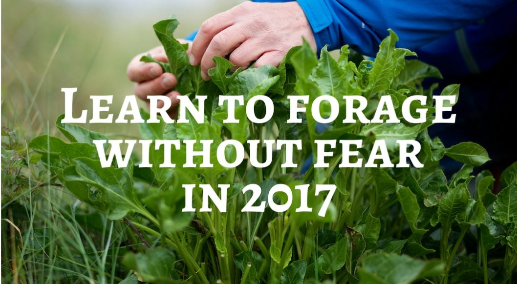2017 Foraging Courses Around The UK