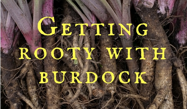 Edible Burdock Roots