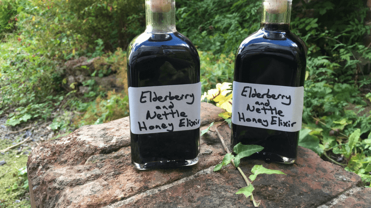 Elderberry Nettle Honey Cordial Recipe