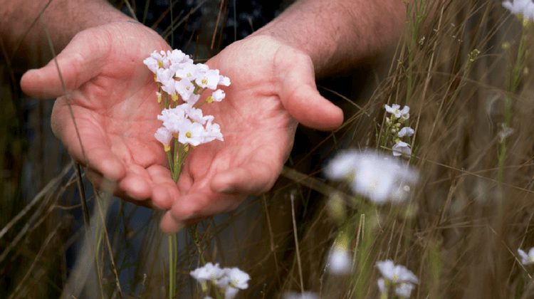 Foraging As An Act Of Reverence
