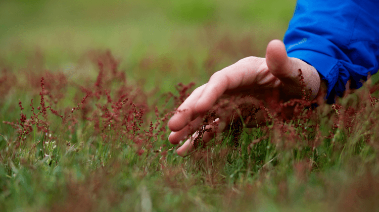 Foraging Courses UK