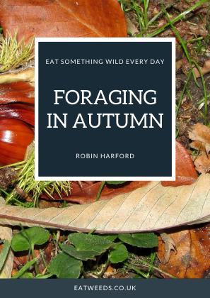 Foraging in Autumn