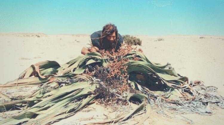 Frank Cook Herbalist