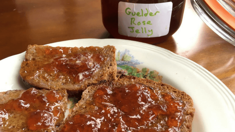 Guelder Rose Jelly Recipe