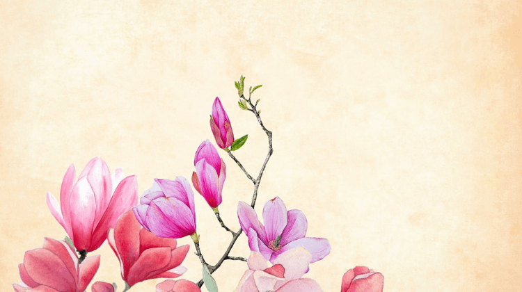 Magnolia Flower Vinegar Recipe