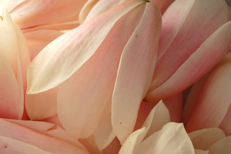 Pickled Magnolia Flowers Recipe