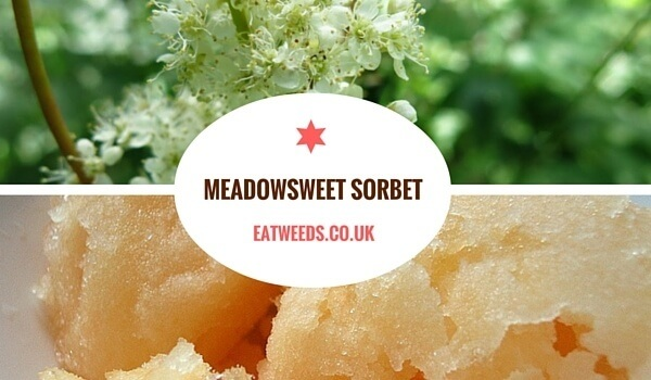 Meadowsweet Sorbet Recipe