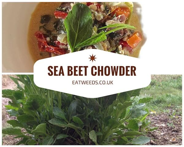 Seabeet Recipe