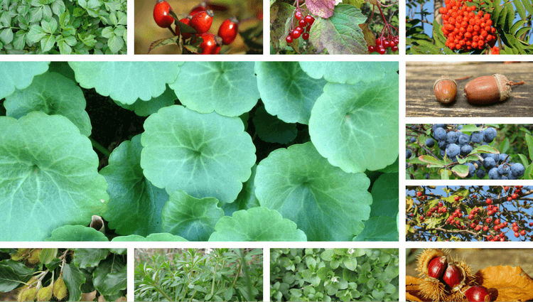 What to Forage in November - The Best Wild Edible Plants To Gather