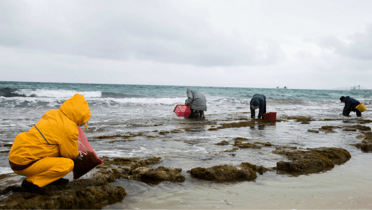 When Is The Best Time To Harvest Seaweed