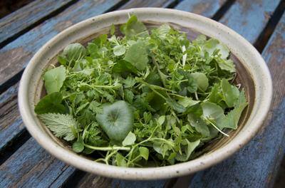 Wild Winter Herb Salad