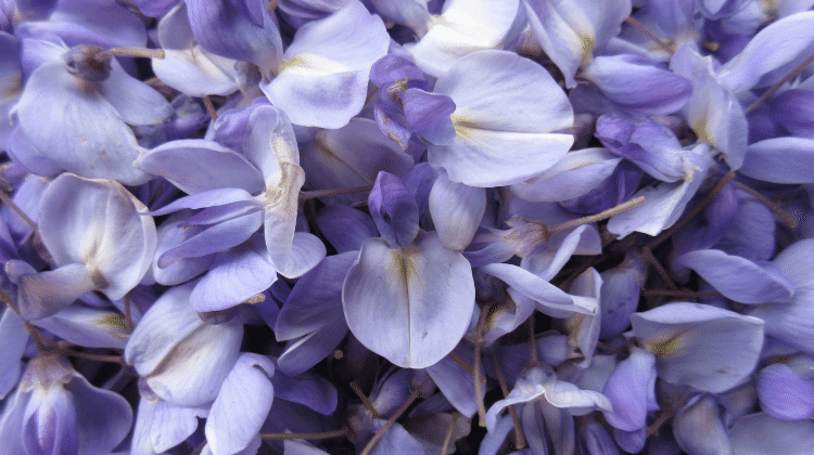 Wisteria Flower Syrup Recipe